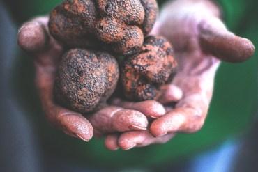 Marché de la truffes Rognes - Magali ANCENAY Photographe Culinaire