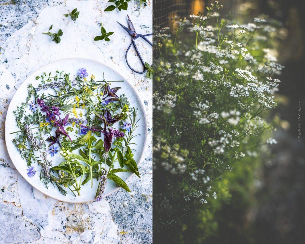 fines herbes - Magali ANCENAY AGENCY