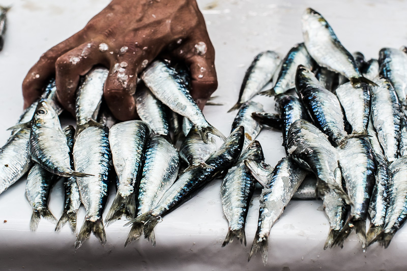 Sardines Essaouira 2017 - Magali ANCENAY
