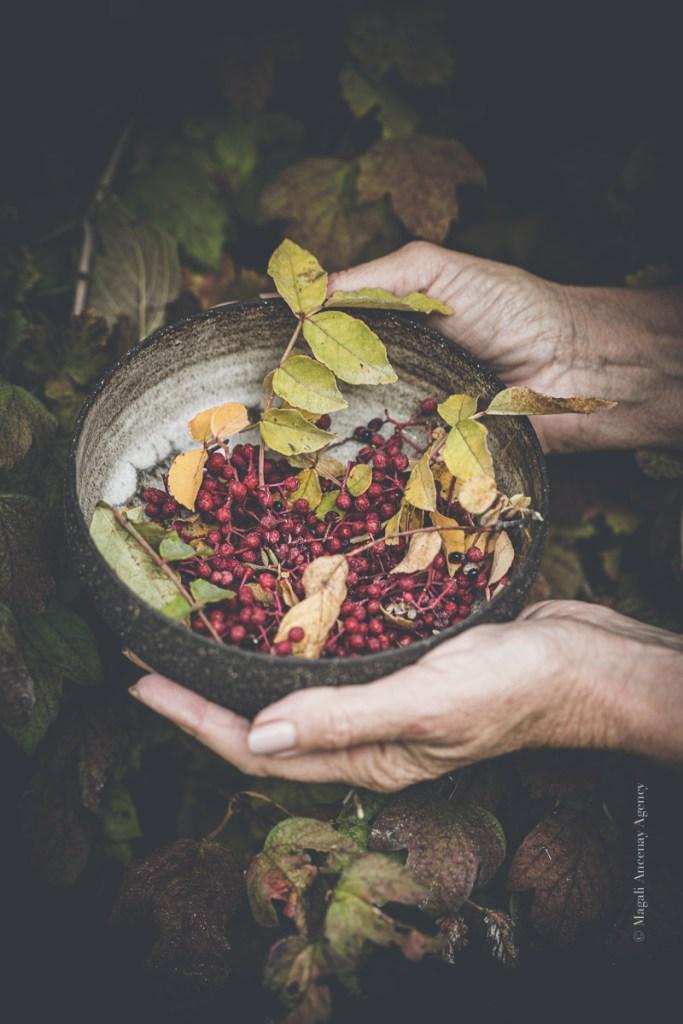 Récolte du jardin - Magali Ancenay