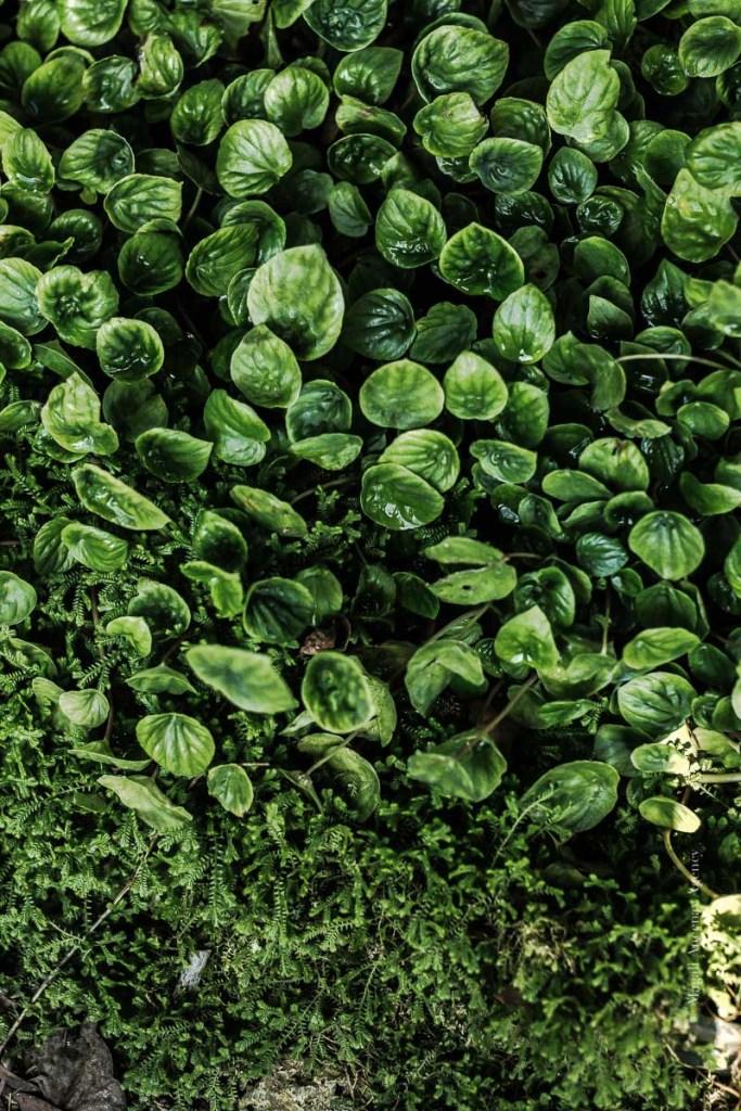 Jardin des plantes - Magali ANCENAY