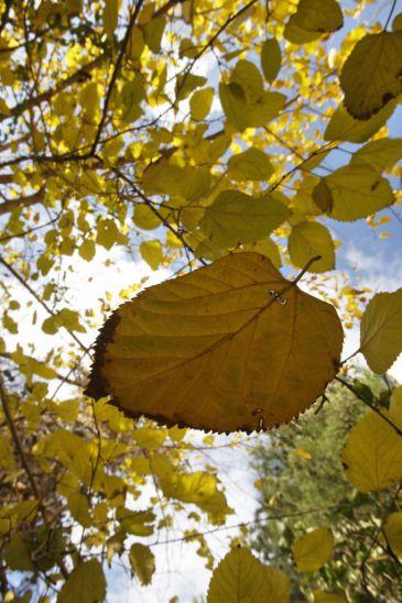 Llega el otoño y se quedará hasta el 21 de diciembre
