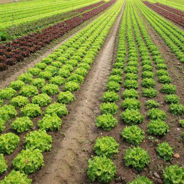 Resultado de imagem para agricolas sostenibles
