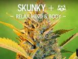 graine de cannabis - skunky+