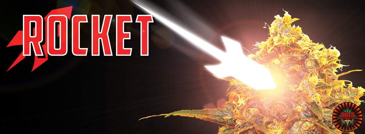 Rocket - Queen Seeds