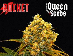 Rocket Queen Seeds