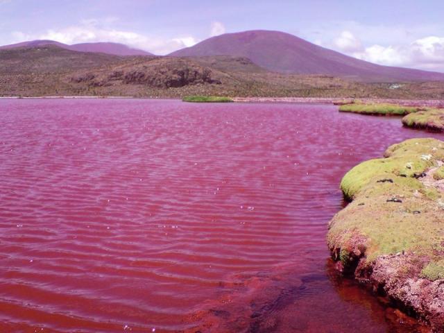 Los misterios de la Laguna Roja en el desértico norte de Chile
