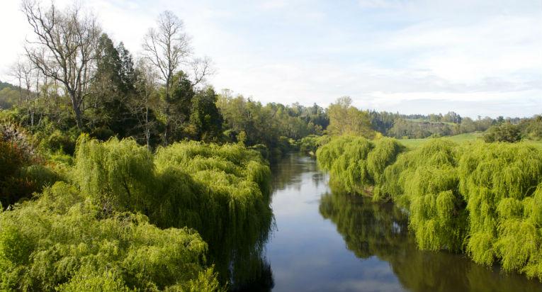 Ruta Huilliche: Un viaje a nuestras raíces en medio de campos y vegetación
