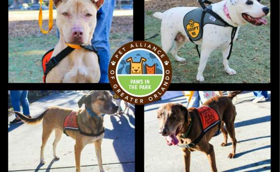 Festival canino Paws in the Park Orlando
