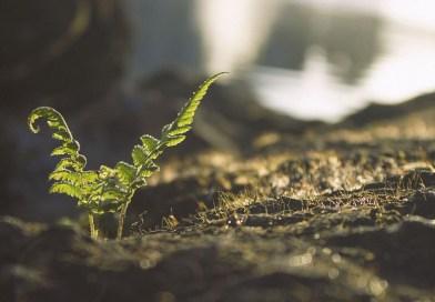 Viticulture raisonnée, viticulture biologique et la biodynamie