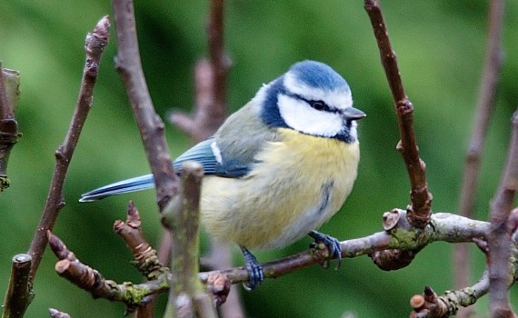 Oiseau Jaune Et Bleu Archives Quel Est Cet Animal