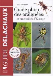 araignées Bellmann