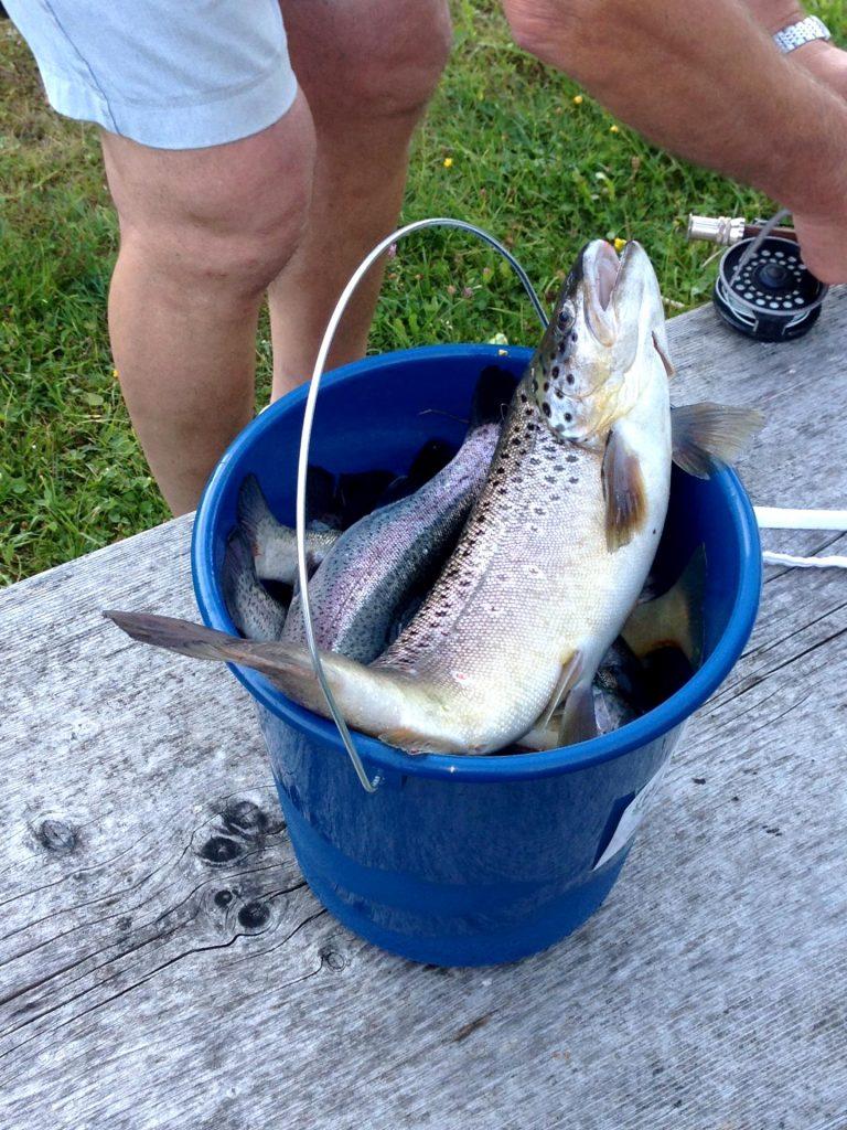 Quellfisch Resort Schwendt Fischen im Kaisergebirge in Tirol