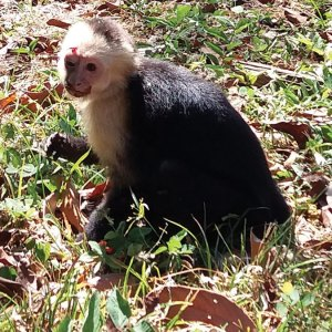 This stunned and injured monkey was spotted in front of our house. KSTR to the rescue!