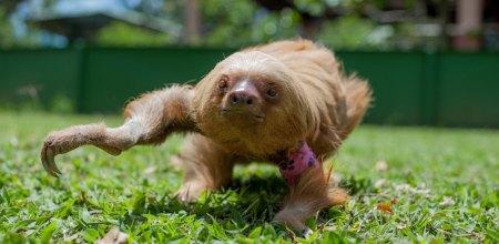 Rihanna the sloth