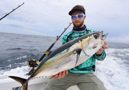 Yellowtail Tuna