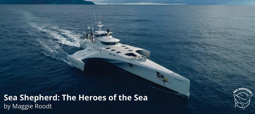 Sea Shepherd header