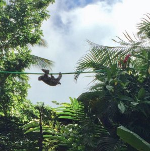 Sloth on rope bridge