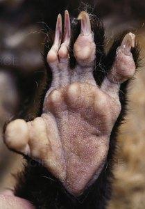 Opossum hand