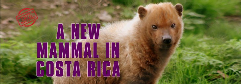 Bush Dog header