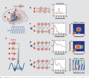 Brain waves listening to  music