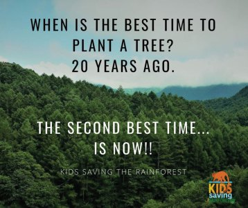 When is the best time to plant a tree? 20 years ago. The second best time is now.