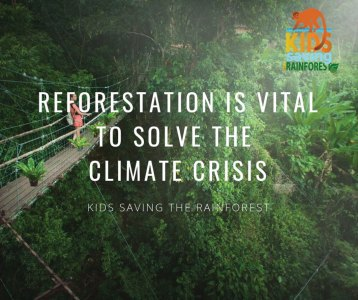 Reforestation is vital to solve the climate crisis