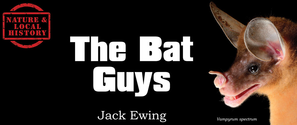 The Bat Guys header