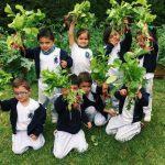Las huertas escolares parte I: Alimento para los guaguas