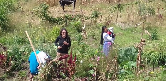 Agroecología, consumo y alimentación