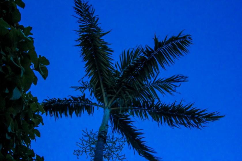 Palm Beach, FL