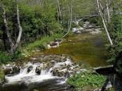 río Ribeles a su paso por la Quesería artesanal El Cabriteru