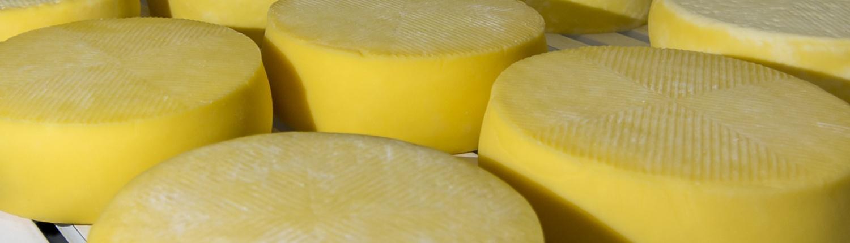 Excelencia del queso