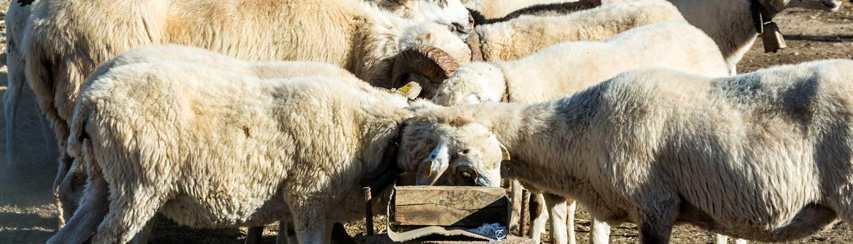 Alimentación de los animales