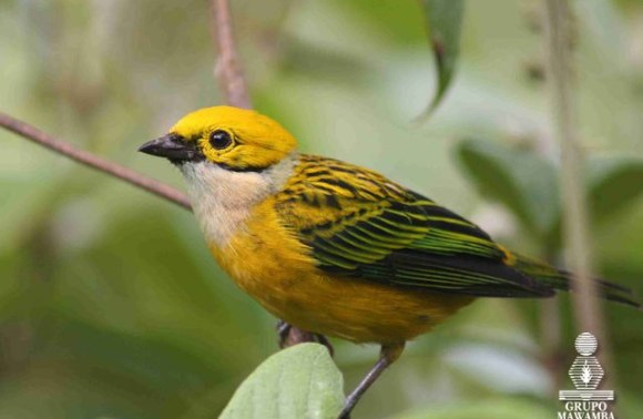 Costa Rica Bird Watching Tours