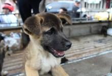 Retiro de mascotas en lugares no apropiados