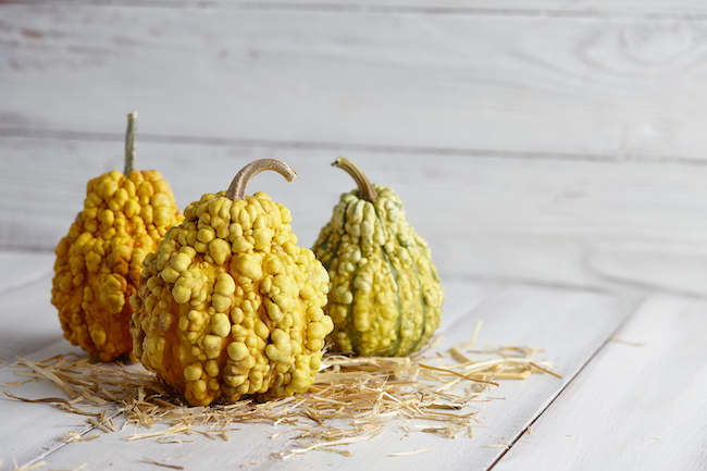 Warty halloween pumpkins on white planks, holiday decoration