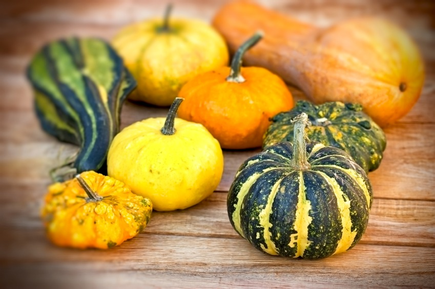 Fall Gourds and Squash: What They Are and How to Use Them - Quicken Loans Zing Blog
