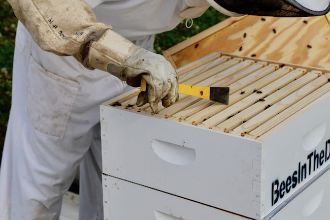 Scraping of the residue off a hive