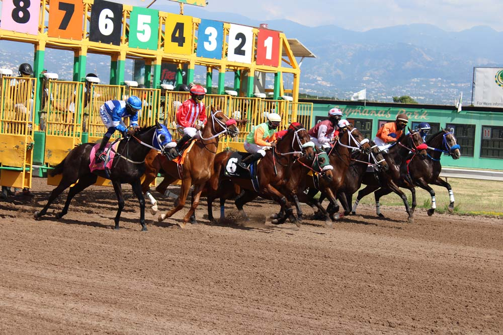 Bern Notice (second left in red and white silks) a bit slowly out in the 9 furlongs and 25 yards contest. (Photo: Kimberly Bartlett)