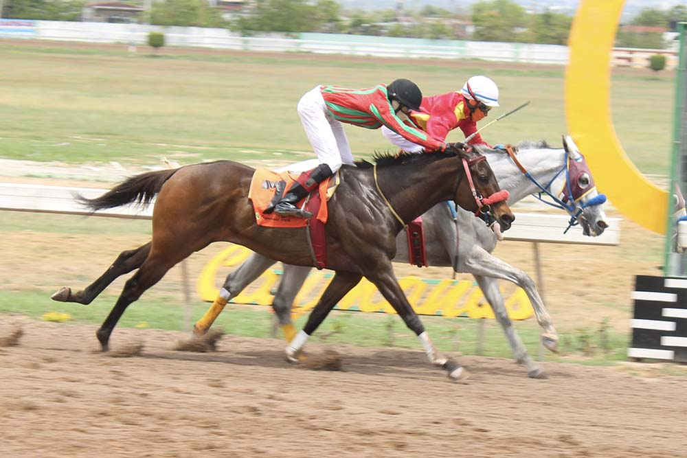 Pure Heart (the grey) with Youville Pinnock atop getting the neck in front of Pakman where it mattered most. (Photo: Kimberly Bartlett)
