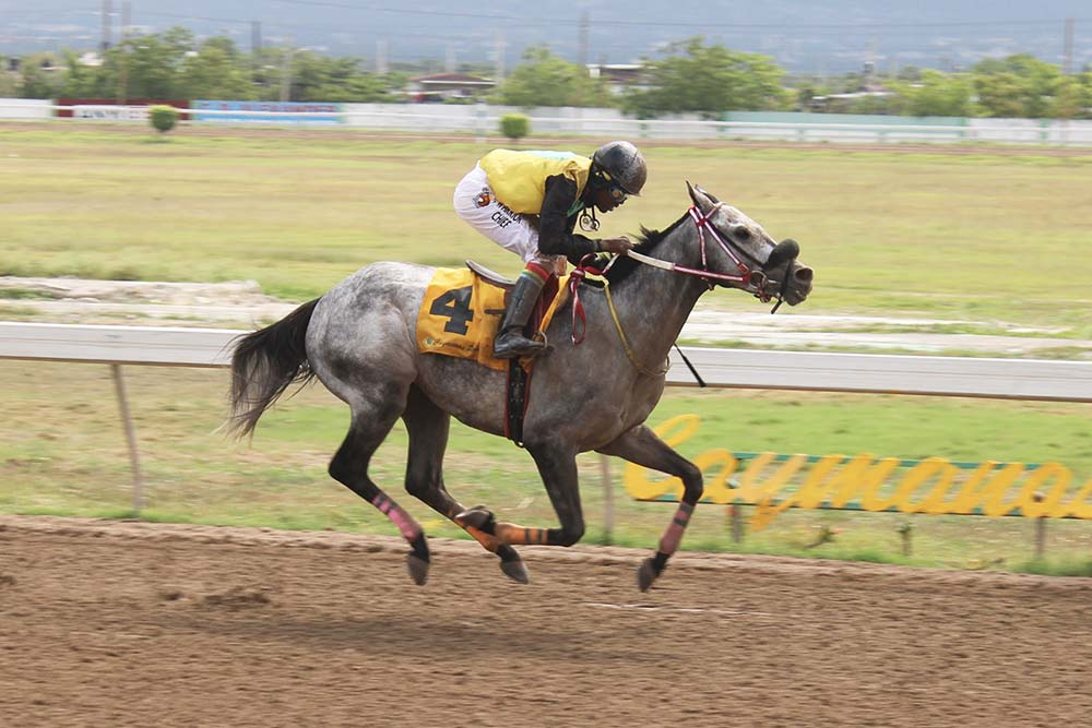San Siro in full flight with Dane Nelson in the saddle. (Photo: Kimberly Bartlett)