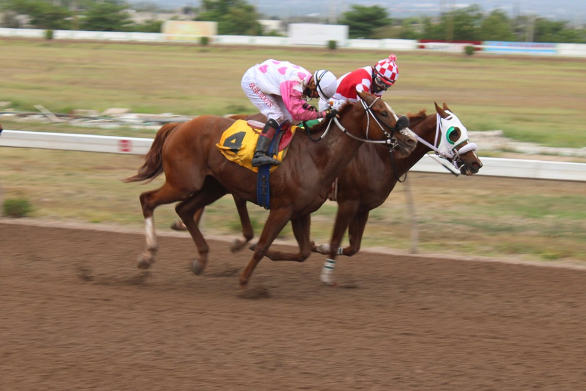 Miniature Man  (#4) and Further and Beyond locked together just before reaching the winning post. (Photo: Kimberly Bartlett)