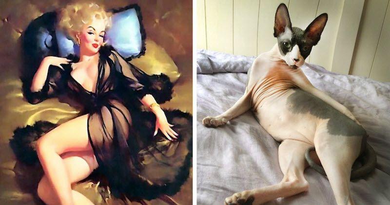 דוגמניות מול חתולים. מי לדעתכם לוקח?