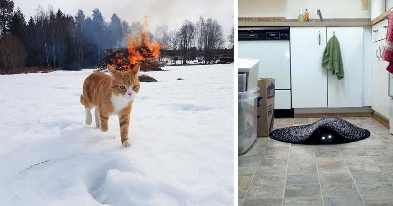 גם מי שאוהב חתולים הולך להיות מופתע.