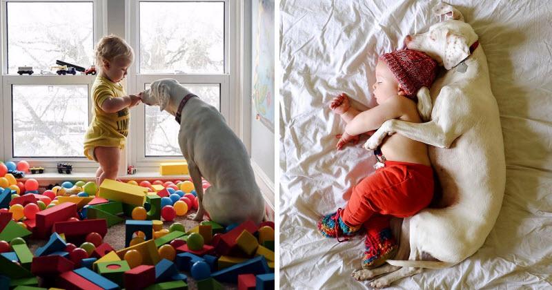 עוד הוכחה שכלבים הם החברים הכי טובים שיש לאדם