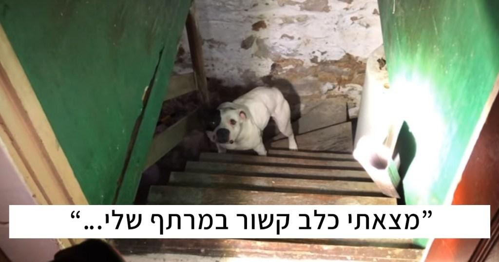 אתם הולכים להתרגש אחרי שתראו איך הכלבה הזאת הגיבה כשהצילו אותה מהמרתף בו ננטשה