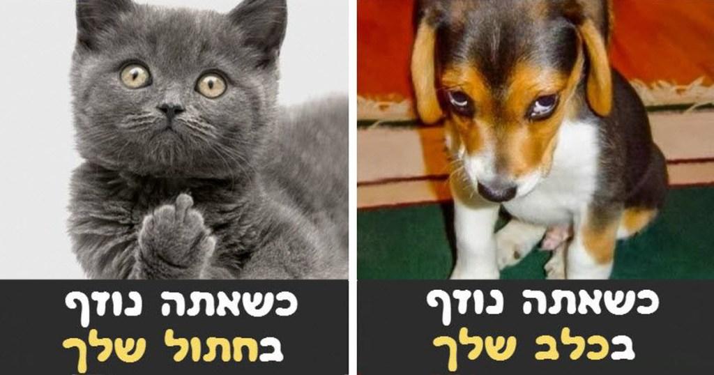 אז מה עדיף? כלב או חתול? התמונות האלו יעזרו לכם להחליט!