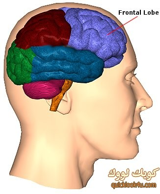 frontal-brain