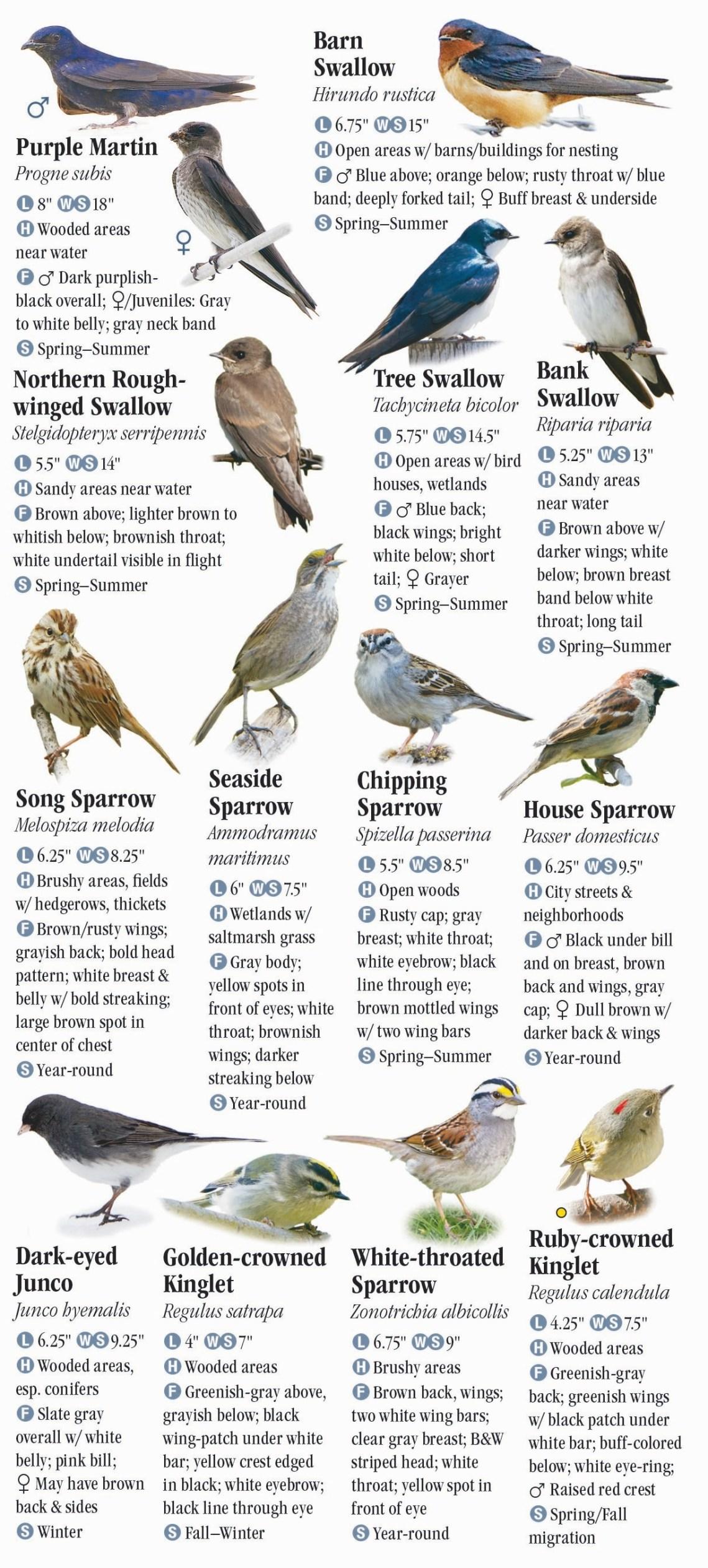 Animal House Back Bar - 182_Birds_-NYC_RP_12_Top Animal House Back Bar - 182_Birds_-NYC_RP_12  Snapshot_304341.jpg